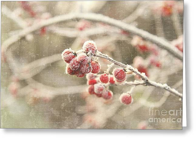 Branches With Early Winter Frost With Red Berries Greeting Card by Sandra Cunningham