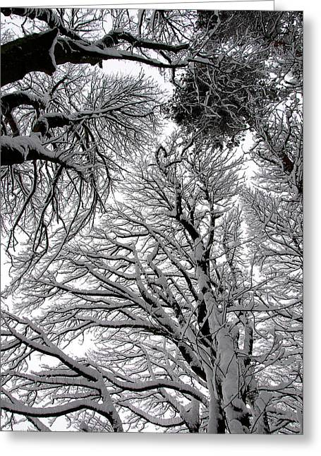 Mark Denham Greeting Cards - Branches with snow Greeting Card by Mark Denham