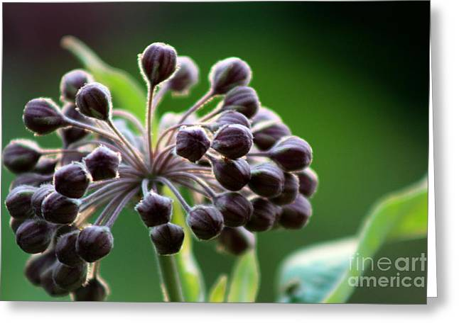 Wildflower Photograph Greeting Cards - Branching Out  Greeting Card by Neal  Eslinger