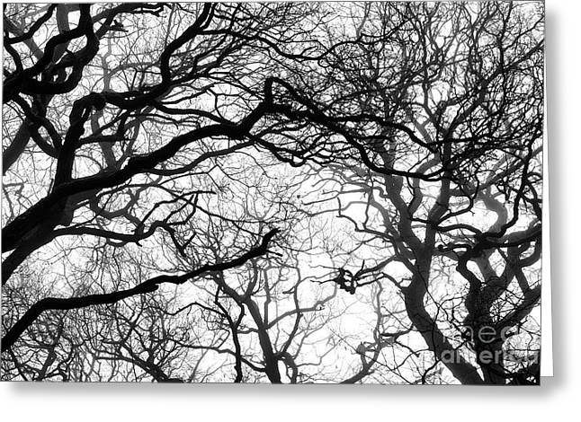 Wintry Photographs Greeting Cards - Branching Out Greeting Card by Tim Gainey