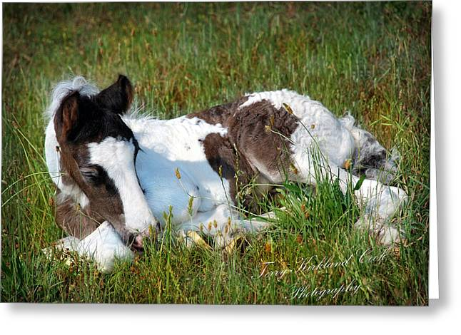 Gypsy Horses Greeting Cards - Brand New Isaac Greeting Card by Terry Kirkland Cook