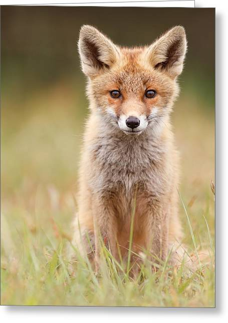 Brave New Fox Kit Greeting Card by Roeselien Raimond