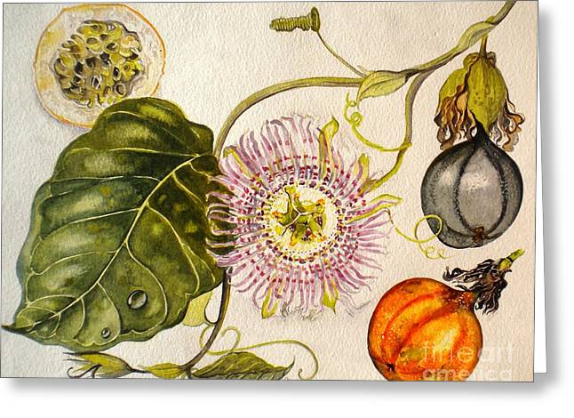 Brazilian Passion Fruit             Passiflora Ligularis Seme Greeting Card by Sandra Phryce-Jones