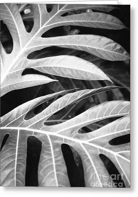 Moist Greeting Cards - Breadfruit Tree Leaves Greeting Card by Dana Edmunds - Printscapes