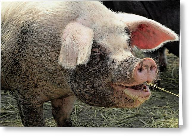 Pig Photos Greeting Cards - Breakfast with a smile Greeting Card by Gordon Dean II