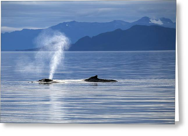 Ocean Mammals Greeting Cards - Breath of a Whale Greeting Card by Michele Cornelius