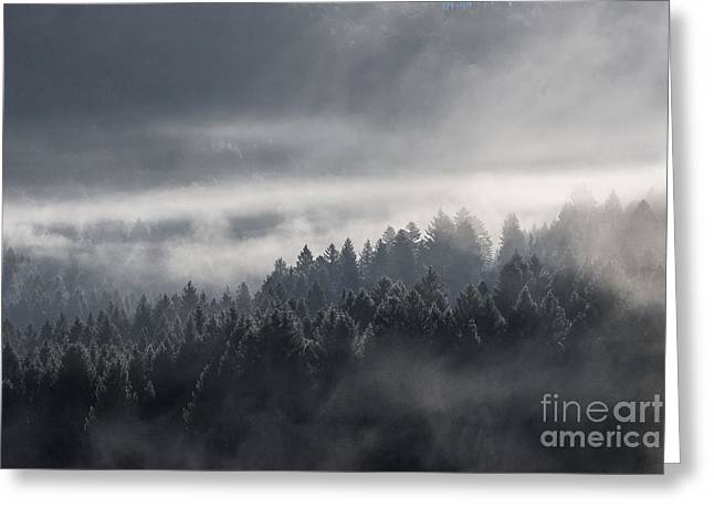Foggy Day Greeting Cards - Breath of the forest Greeting Card by Yuri Santin