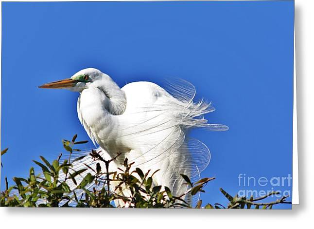 Tern Greeting Cards - Breeze Greeting Card by Chuck  Hicks