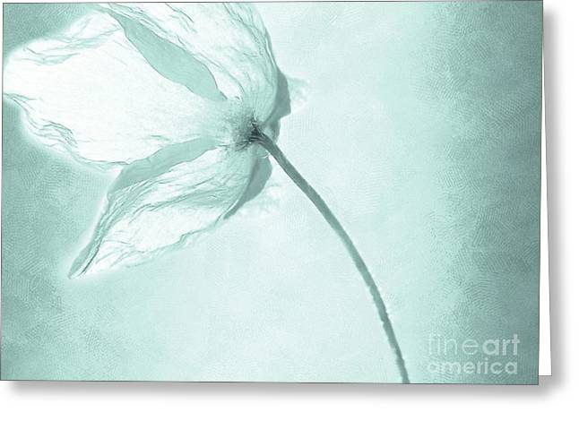 Flowers Photographs Greeting Cards - Breeze Greeting Card by Photodream Art