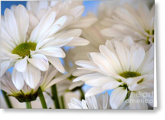 Flower Blossom Greeting Cards - Breezy Greeting Card by Deb Halloran