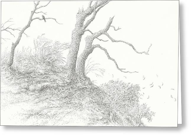 Breezy Drawings Greeting Cards - Breezy Knoll Greeting Card by Steve Mountz