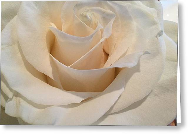 Rose Petals Greeting Cards - Bride Greeting Card by Mary K Conaboy
