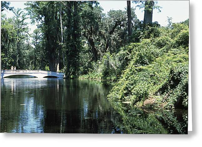 Bridge Across A Swamp, Magnolia Greeting Card by Panoramic Images