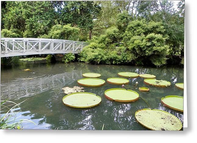 Amazon Greeting Card Greeting Cards - Bridge Over Koi Pond Greeting Card by Sheri McLeroy