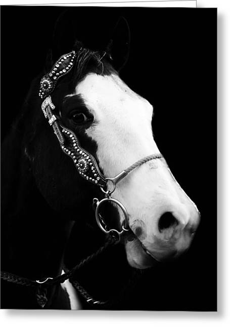Bridled Horse  Greeting Card by Chastity Hoff