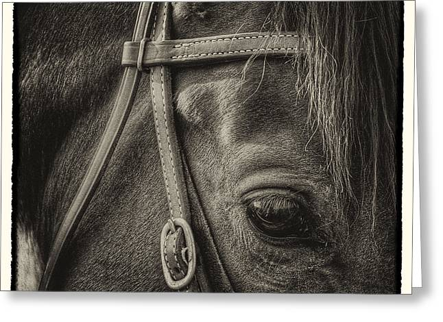 Equus Ferus Greeting Cards - Bridled II Greeting Card by David Patterson