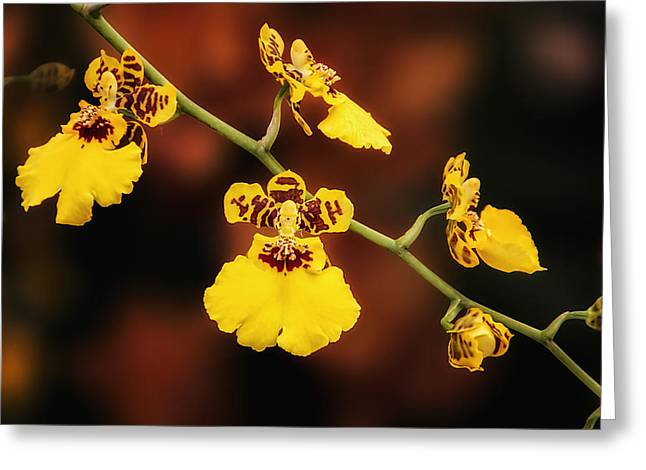 Floral Arrangement Greeting Cards - Bright and Beautiful Orchids Greeting Card by Tom Mc Nemar