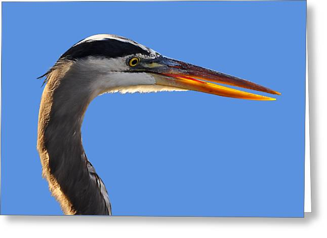 Grey Heron Greeting Cards - Bright Beak Blue .png Greeting Card by Al Powell Photography USA