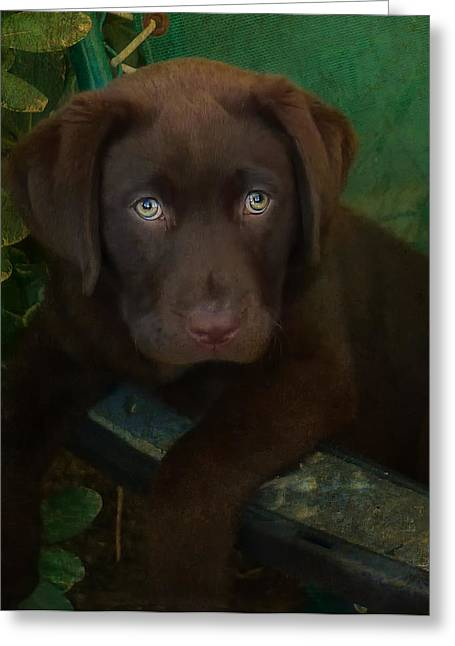 Best Sellers -  - Puppies Photographs Greeting Cards - Bright Eyes Greeting Card by Larry Marshall