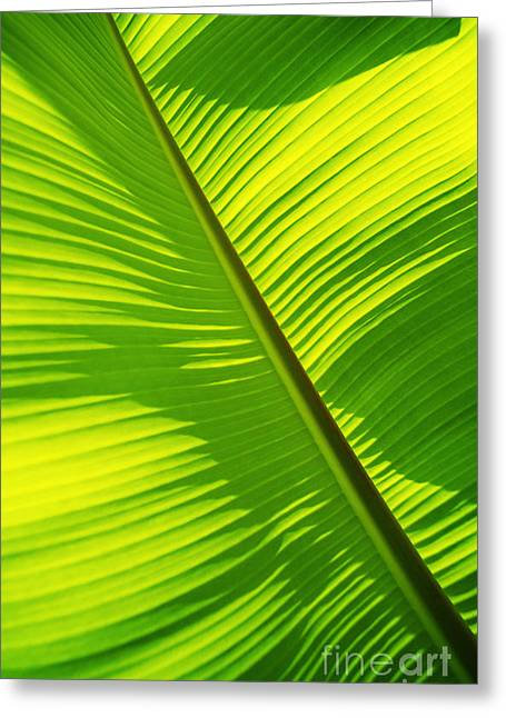 Moist Greeting Cards - Bright Green Banana Leaf Greeting Card by Carl Shaneff - Printscapes