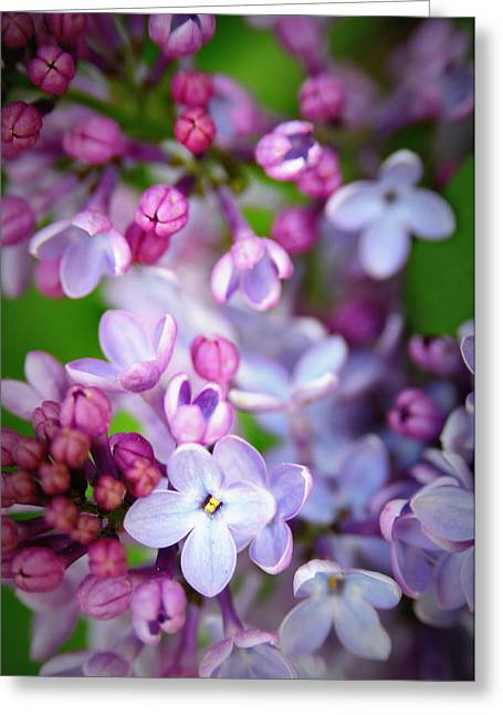 Soft Lilac Greeting Cards - Bright Lilacs Greeting Card by The Forests Edge Photography - Diane Sandoval