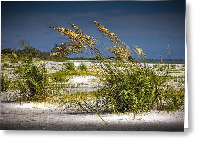 Bright Shore Greeting Card by Marvin Spates
