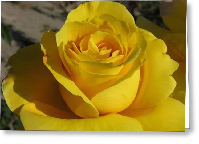 Rose Petals Greeting Cards - Bright Yellow Rose Greeting Card by Shirley Stevenson Wallis