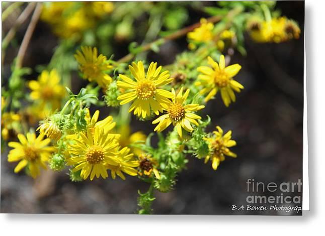 Pasco County Greeting Cards - Brighter than Sunshine Greeting Card by Barbara Bowen