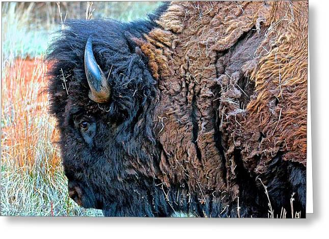 Hills Sculptures Greeting Cards - Brilliant Bull Sqr Greeting Card by Peggy Detmers