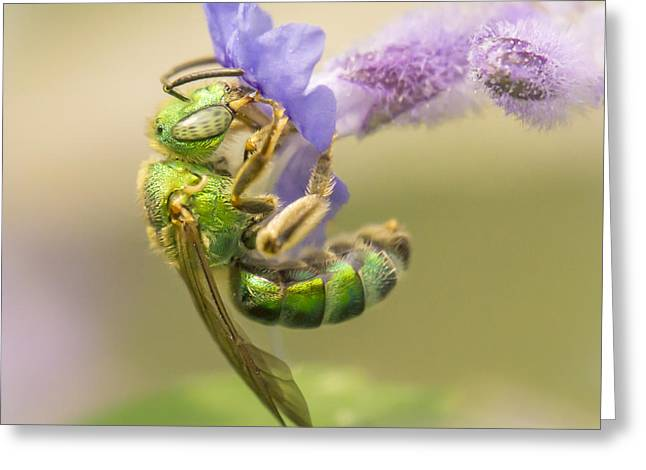 Pollinator Greeting Cards - Brilliant Green Bee Greeting Card by Jim Hughes