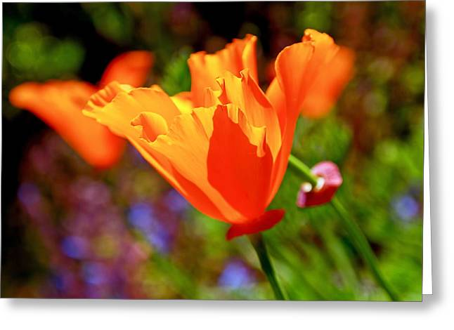 Brilliant Spring Poppies Greeting Card by Rona Black