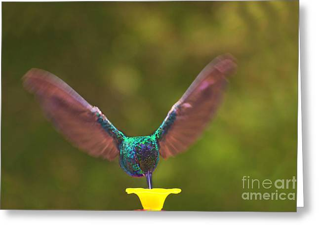 Hovering Greeting Cards - Brilliant Tom Greeting Card by Al Bourassa