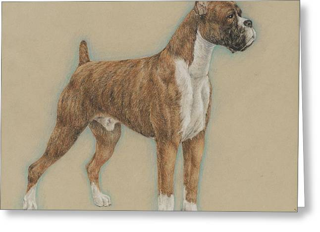 Boxer Pastels Greeting Cards - Brindle Boxer Greeting Card by Ann Johnston