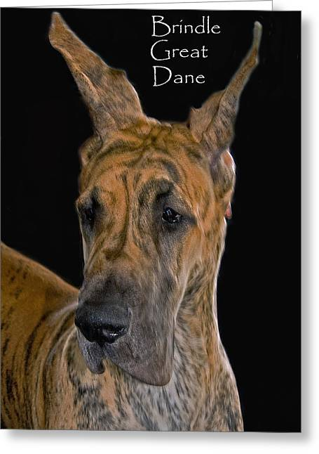 Brindle Greeting Cards - Brindle Great Dane Greeting Card by Larry Linton