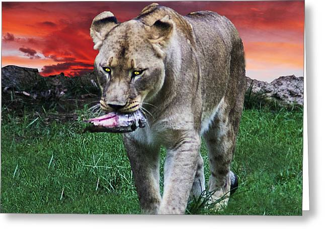 Lioness Greeting Cards - Bringing Home Dinner Greeting Card by Frank Savarese