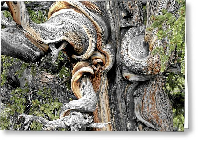 Small Trees Greeting Cards - Bristlecone Pine - I am not part of history - history is part of me Greeting Card by Christine Till
