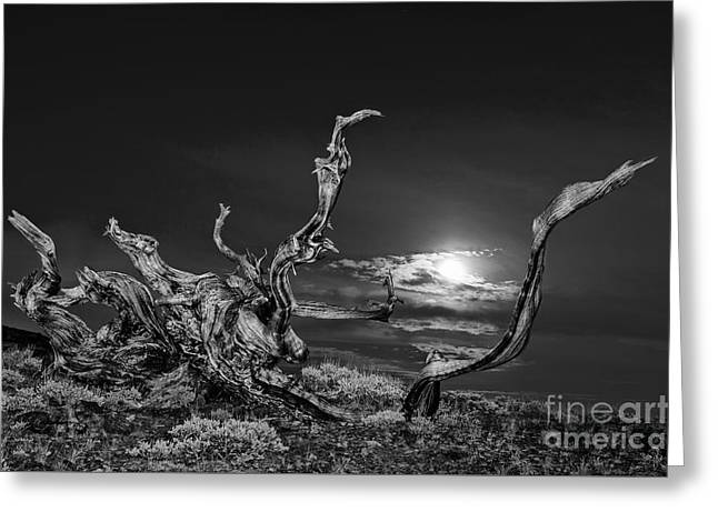 Bristlecone Pine And The Moon Greeting Card by Jamie Pham