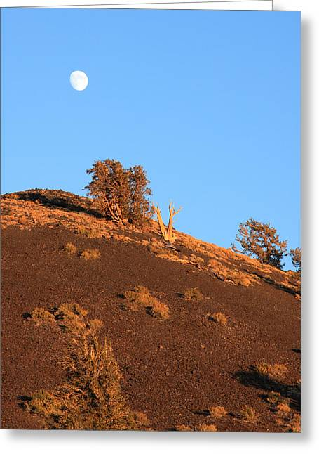 White Pine County Greeting Cards - Bristlecone Pine Moonrise Greeting Card by Troy Montemayor