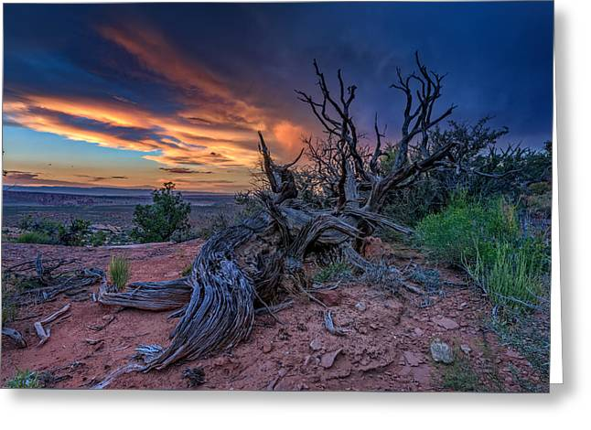 Monolith Greeting Cards - Bristlecone Sunset Greeting Card by Rick Berk