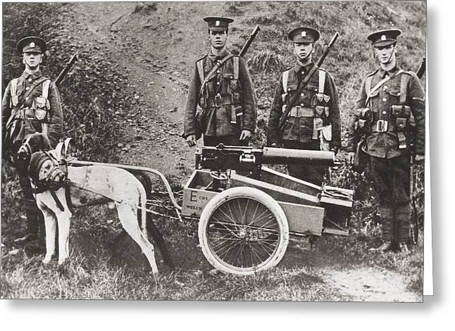 Pull Drawings Greeting Cards - British Army Using Dogs To Pull A Greeting Card by Ken Welsh