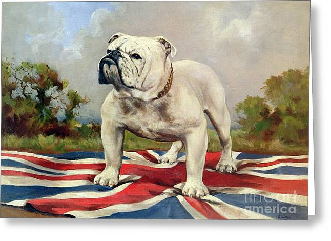 English Bulldog Portrait Greeting Cards - British Bulldog Greeting Card by English School