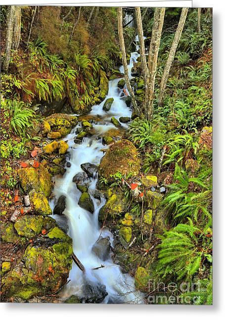 British Columbia Rainforest Falls Greeting Card by Adam Jewell