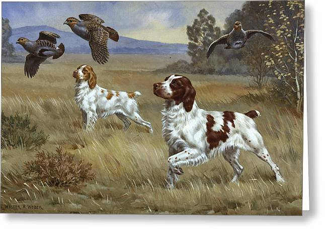 Brittany Greeting Cards - Brittany Spaniels Flush Three Birds Greeting Card by Walter A. Weber