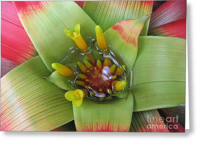 Bromeliad Sculptures Greeting Cards - Bro-Me-Leigh-Add Greeting Card by Bradley Bates