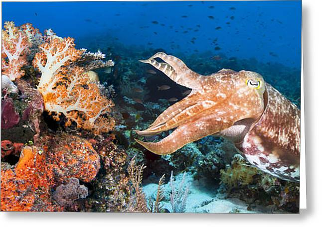 Dave Greeting Cards - Broadclub Cuttlefish and Reef Greeting Card by Dave Fleetham - Printscapes