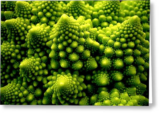 Best Sellers -  - Broccoli Greeting Cards - Broccoli Greeting Card by Dragica  Micki Fortuna