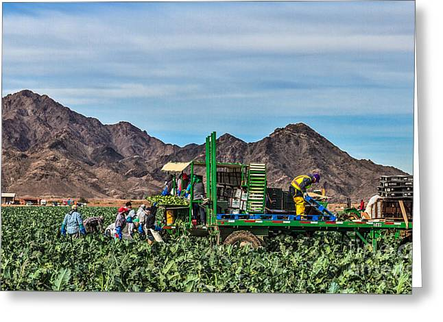 Broccoli Harvest Greeting Card by Robert Bales