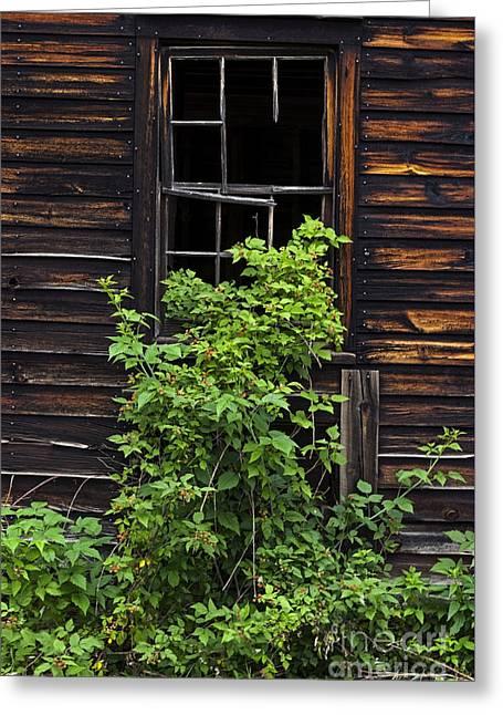Old Barns Greeting Cards - Broken Barn Window Greeting Card by Debra Fedchin
