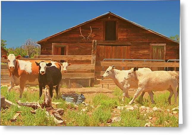 Mccrea Greeting Cards - Broken Corral Winona Arizona Greeting Card by Gus McCrea
