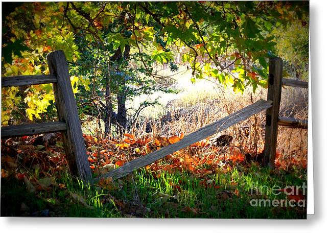Fall Photographs Greeting Cards - Broken Fence in Sycamore Park Greeting Card by Carol Groenen